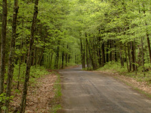 beech-forest-in-spring-Parkway-north
